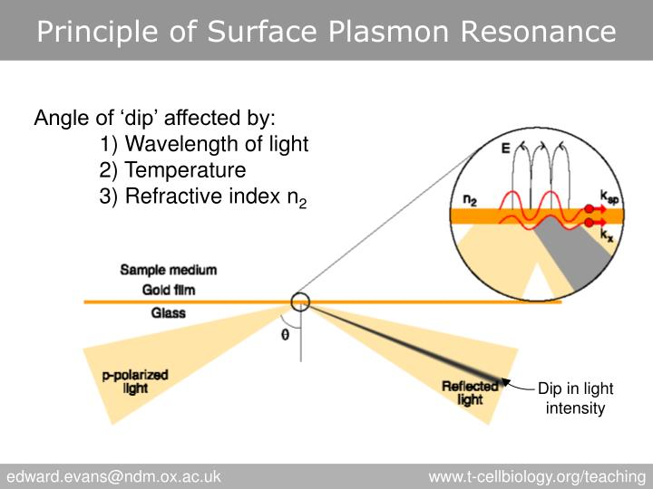 Principle of Surface Plasmon Resonance