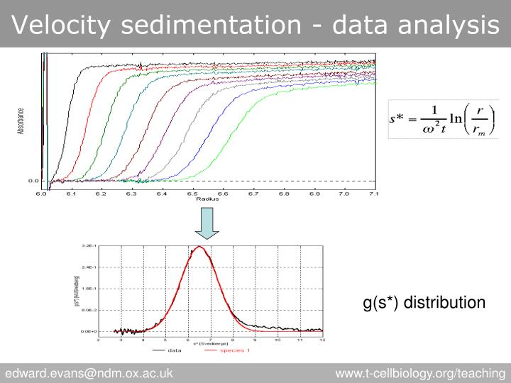 Velocity sedimentation - data analysis