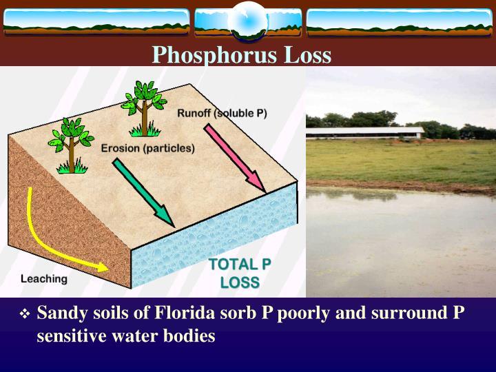 Phosphorus Loss