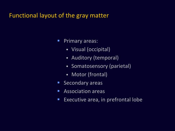 Functional layout of the gray matter