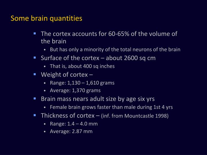 Some brain quantities