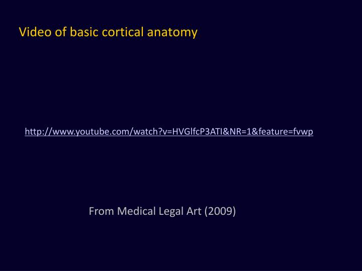 Video of basic cortical anatomy