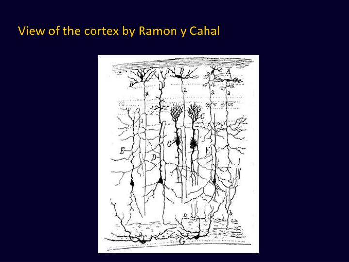 View of the cortex by Ramon y Cahal