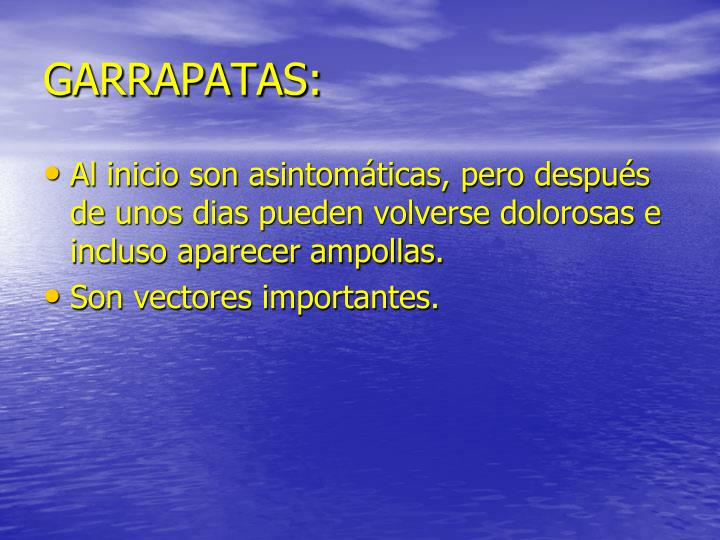 GARRAPATAS: