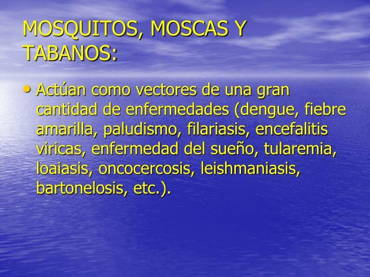 MOSQUITOS, MOSCAS Y TABANOS: