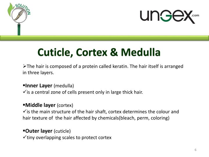 Cuticle, Cortex & Medulla