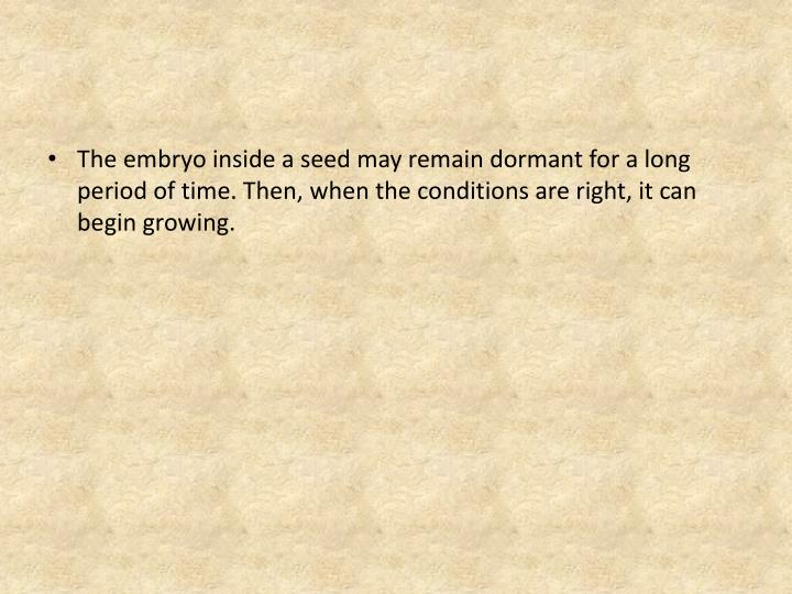 The embryo inside a seed may remain dormant for a long period of time. Then, when the conditions are right, it can begin growing.