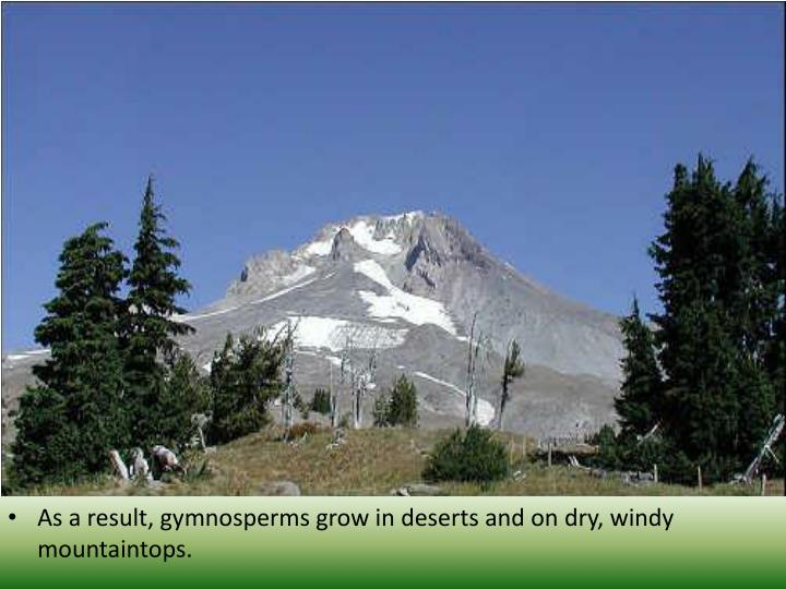 As a result, gymnosperms grow in deserts and on dry, windy mountaintops.