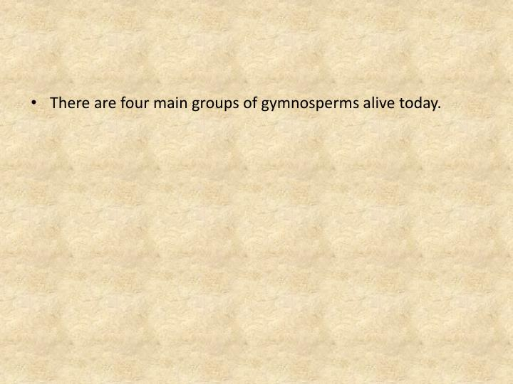 There are four main groups of gymnosperms alive today.