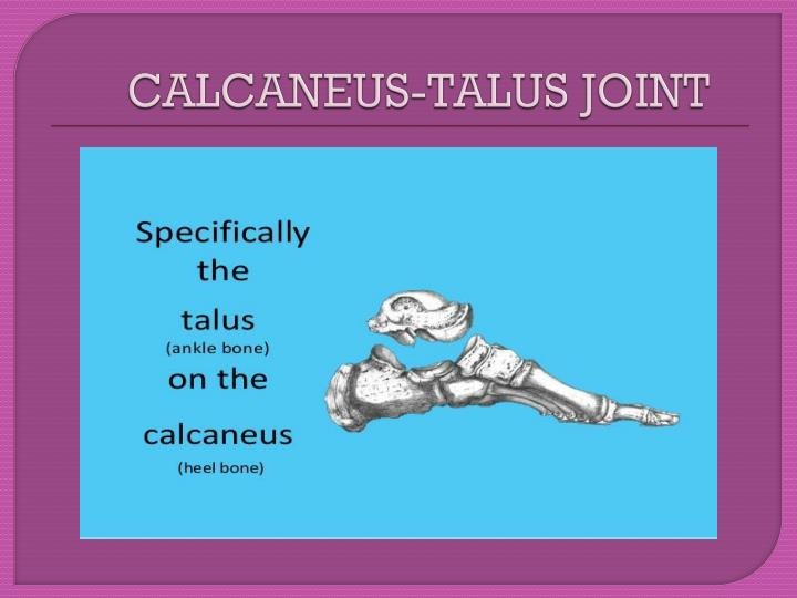 CALCANEUS-TALUS JOINT