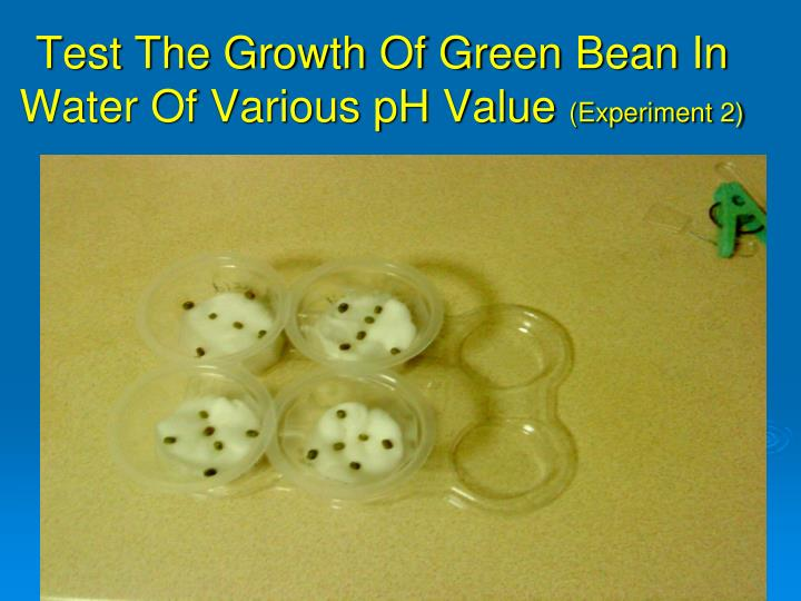 Test The Growth Of Green Bean In Water Of Various pH Value