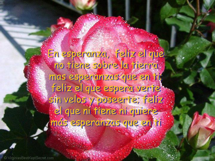 En esperanza,  feliz el que no tiene sobre la tierra mas esperanzas que en ti; feliz el que espera verte sin velos y poseerte; feliz el que ni tiene ni quiere más esperanzas que en ti