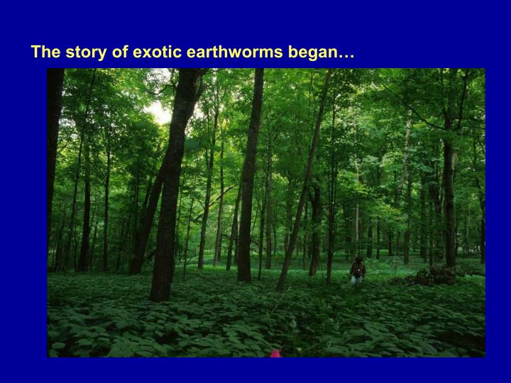The story of exotic earthworms began…