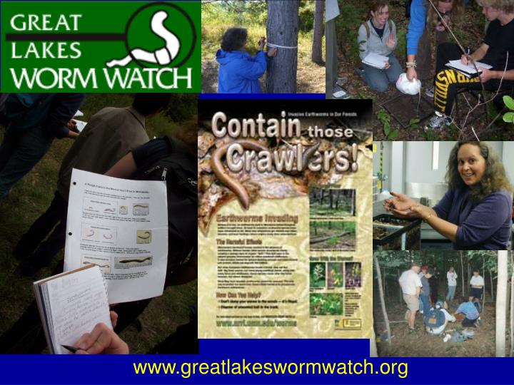 www.greatlakeswormwatch.org