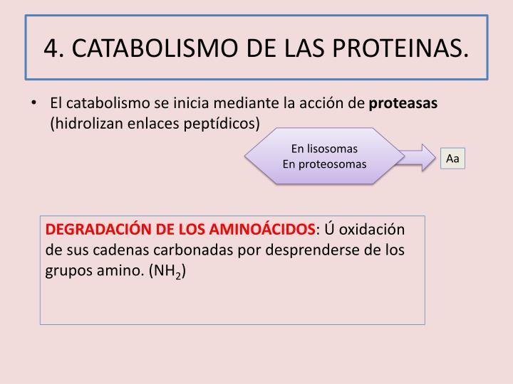 4. CATABOLISMO DE LAS PROTEINAS.