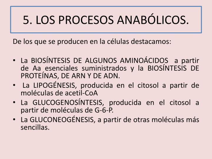 5. LOS PROCESOS ANABÓLICOS.