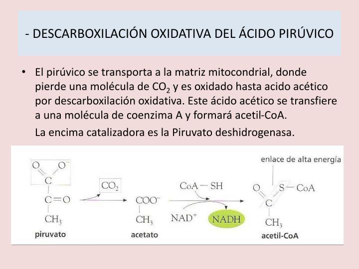 - DESCARBOXILACIÓN OXIDATIVA DEL ÁCIDO PIRÚVICO