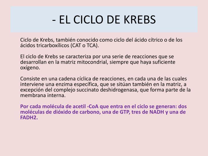 - EL CICLO DE KREBS