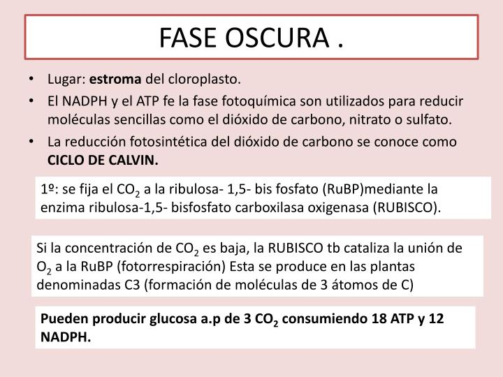 FASE OSCURA .
