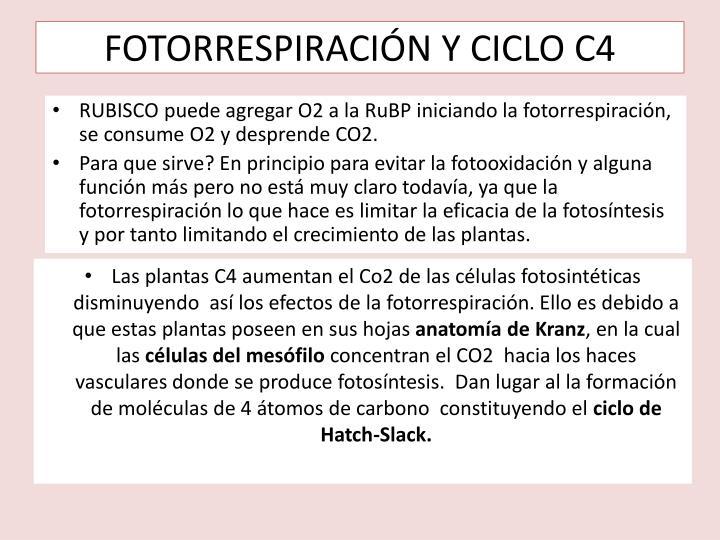 FOTORRESPIRACIÓN Y CICLO C4