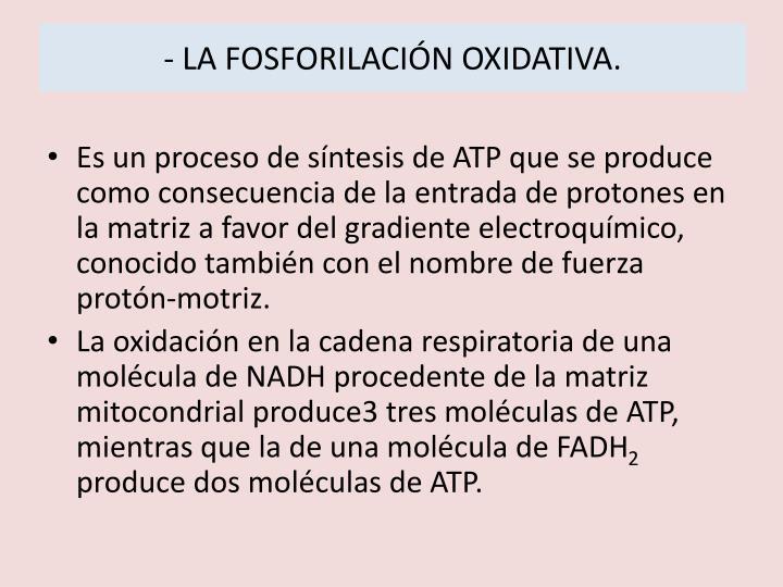 - LA FOSFORILACIÓN OXIDATIVA.