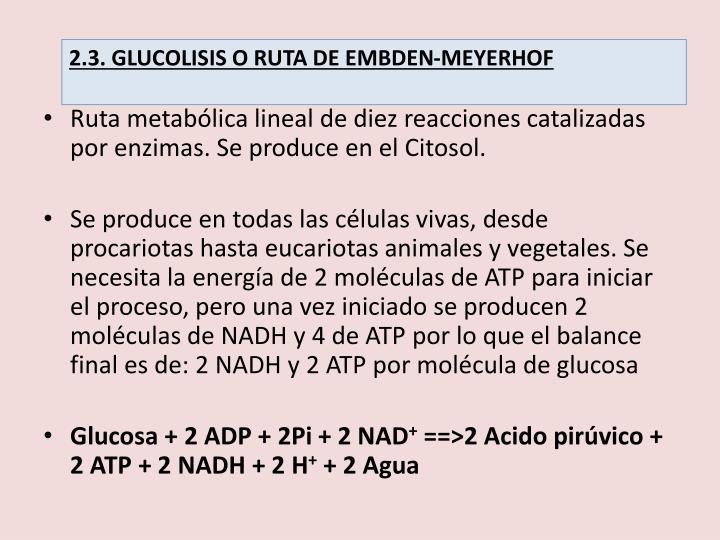 2.3. GLUCOLISIS O RUTA DE EMBDEN-MEYERHOF