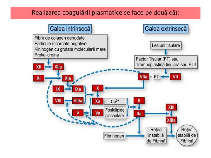 Realizarea coagulării plasmatice