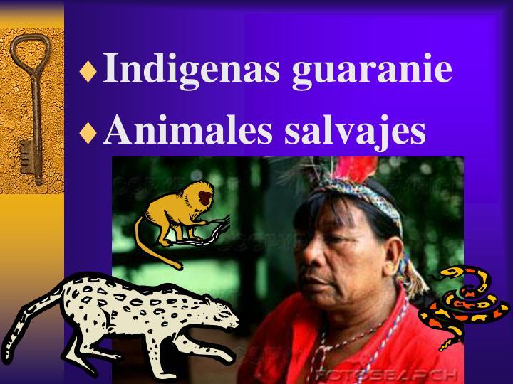 Indigenas guaranie