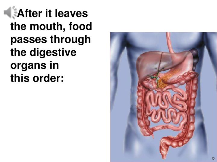 After it leaves      the mouth, food passes through     the digestive    organs in                this order: