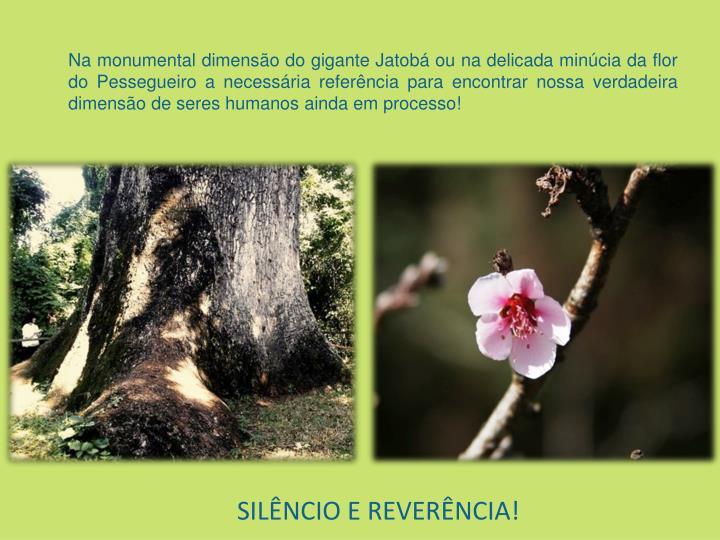 SILÊNCIO E REVERÊNCIA!