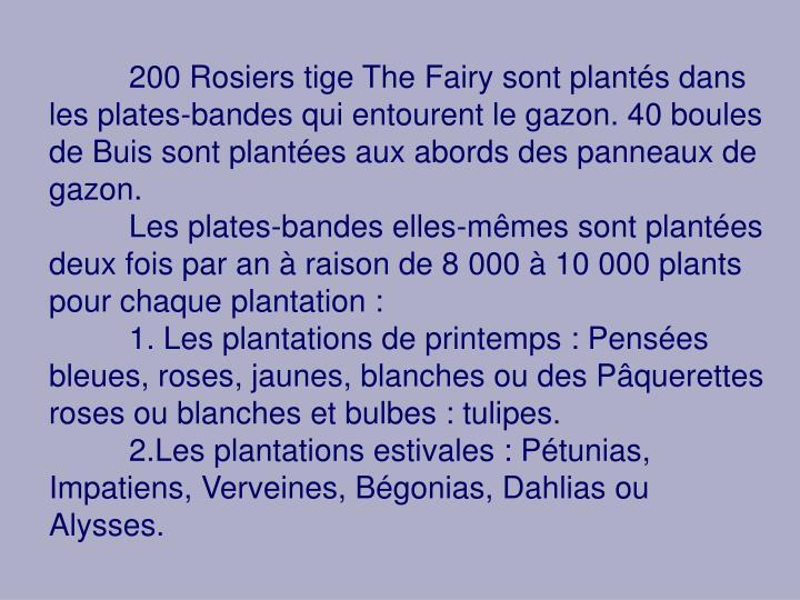200 Rosiers tige The Fairy sont plantés dans les plates-bandes qui entourent le gazon. 40 boules de Buis sont plantées aux abords des panneaux de gazon.