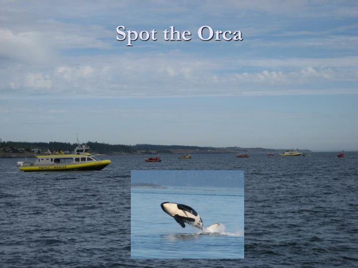 Spot the Orca