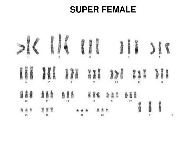 SUPER FEMALE
