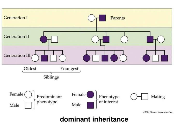 dominant inheritance