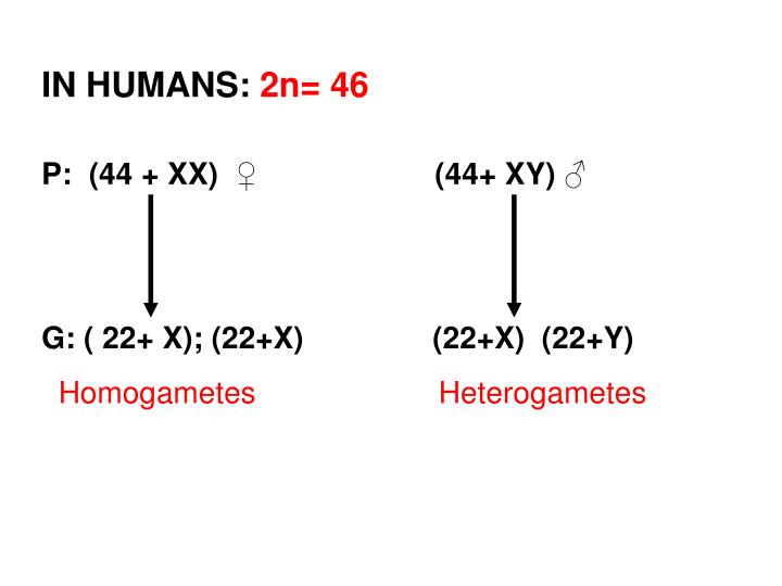 IN HUMANS: