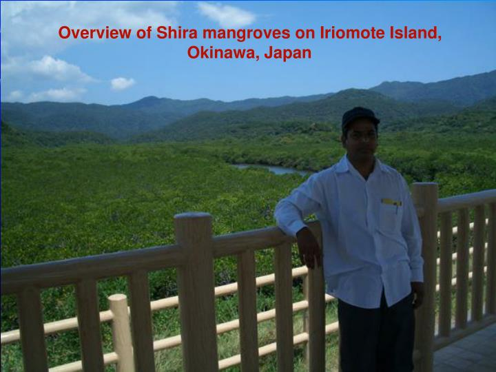 Overview of Shira mangroves on Iriomote Island, Okinawa, Japan