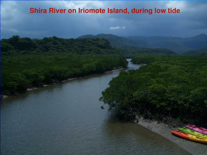 Shira River on Iriomote Island, during low tide