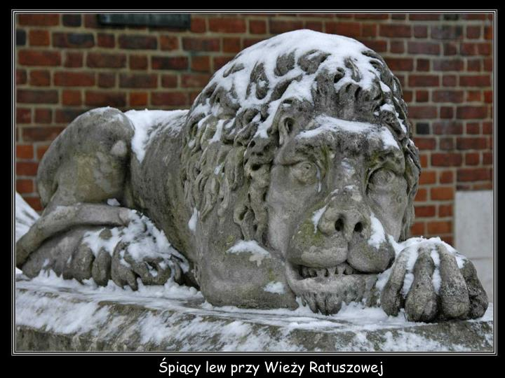 Śpiący lew przy Wieży Ratuszowej