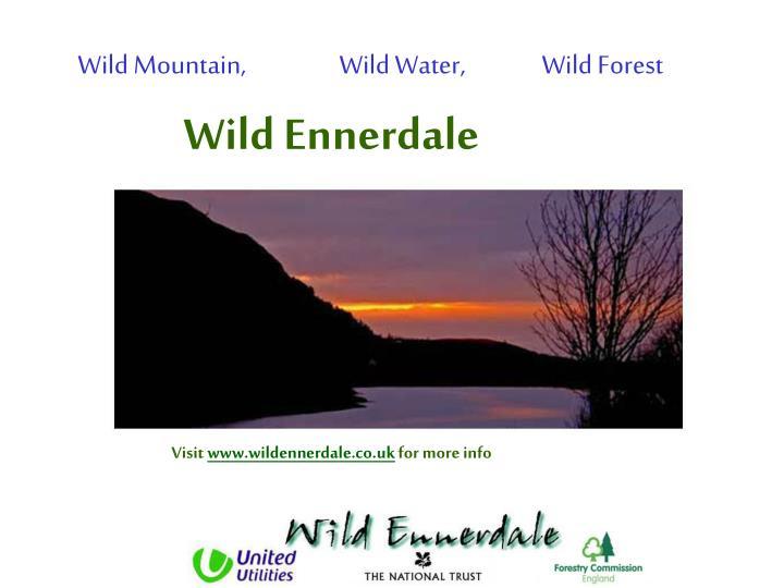 Wild Mountain,