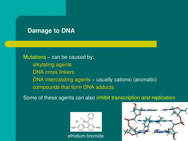 Damage to DNA