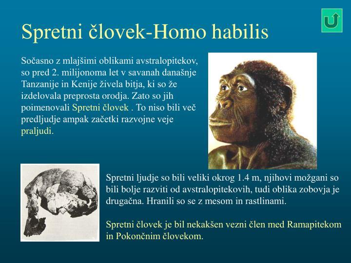 Spretni človek-Homo habilis