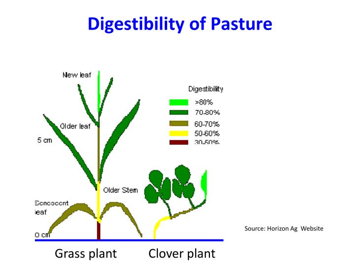 Digestibility of