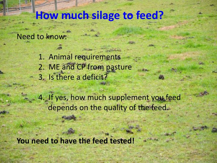 How much silage to feed?