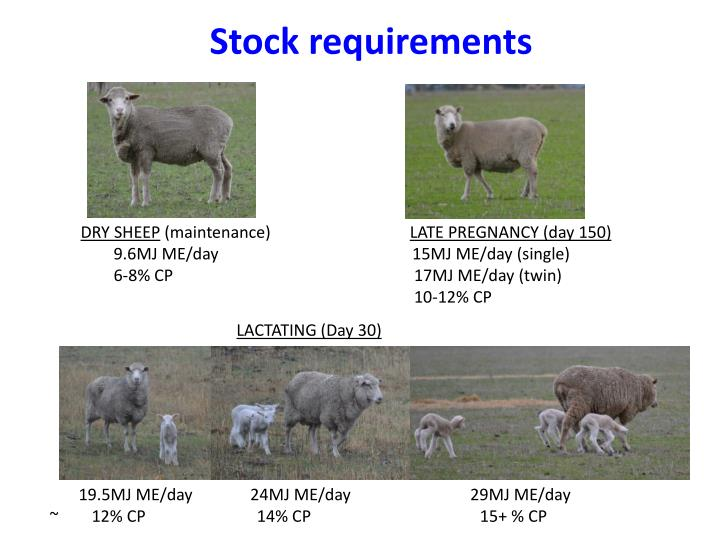 Stock requirements