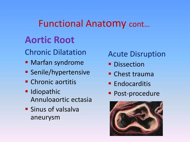 Functional Anat