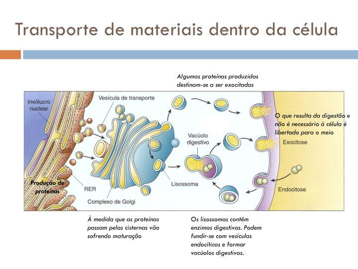 Transporte de materiais dentro da célula