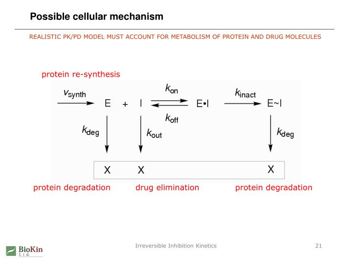 Possible cellular mechanism