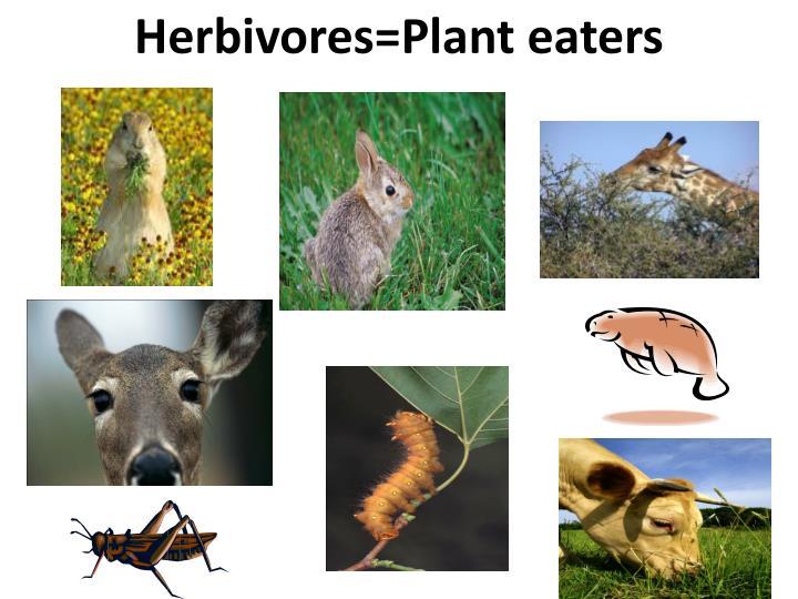 Herbivores=Plant eaters