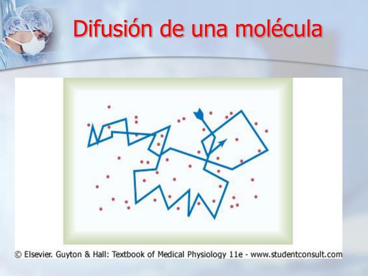Difusión de una molécula