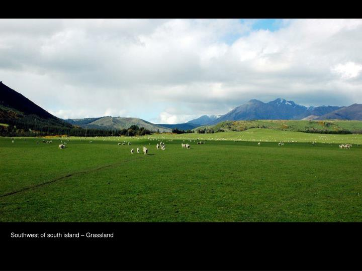 Southwest of south island – Grassland